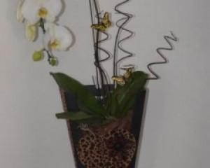 004 - Cachepo com orquídea cascata