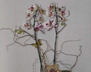 006 Orquídea