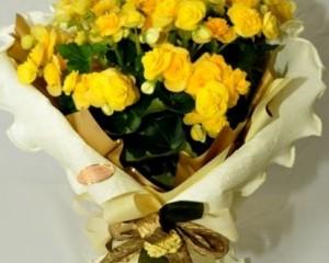 063 - Vaso de begônia, com papel crepom , folhas de seda e laço