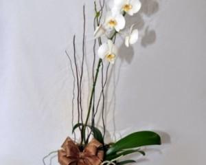 064 - Vaso de orquídea no cachepô