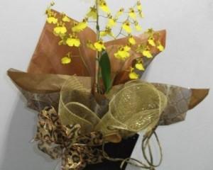 005 - Orquídea